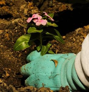 prep-body-for-gardening