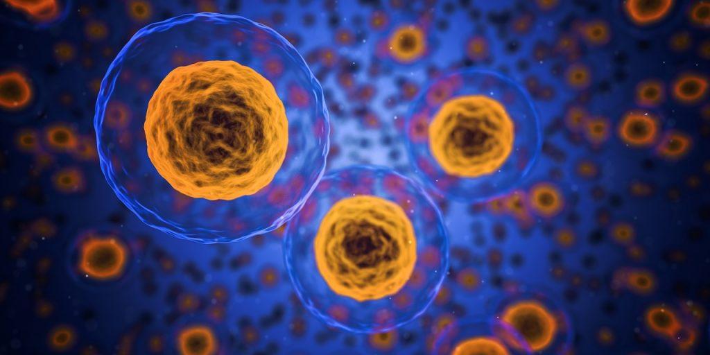 Stem Cell Transplant - Human Cells