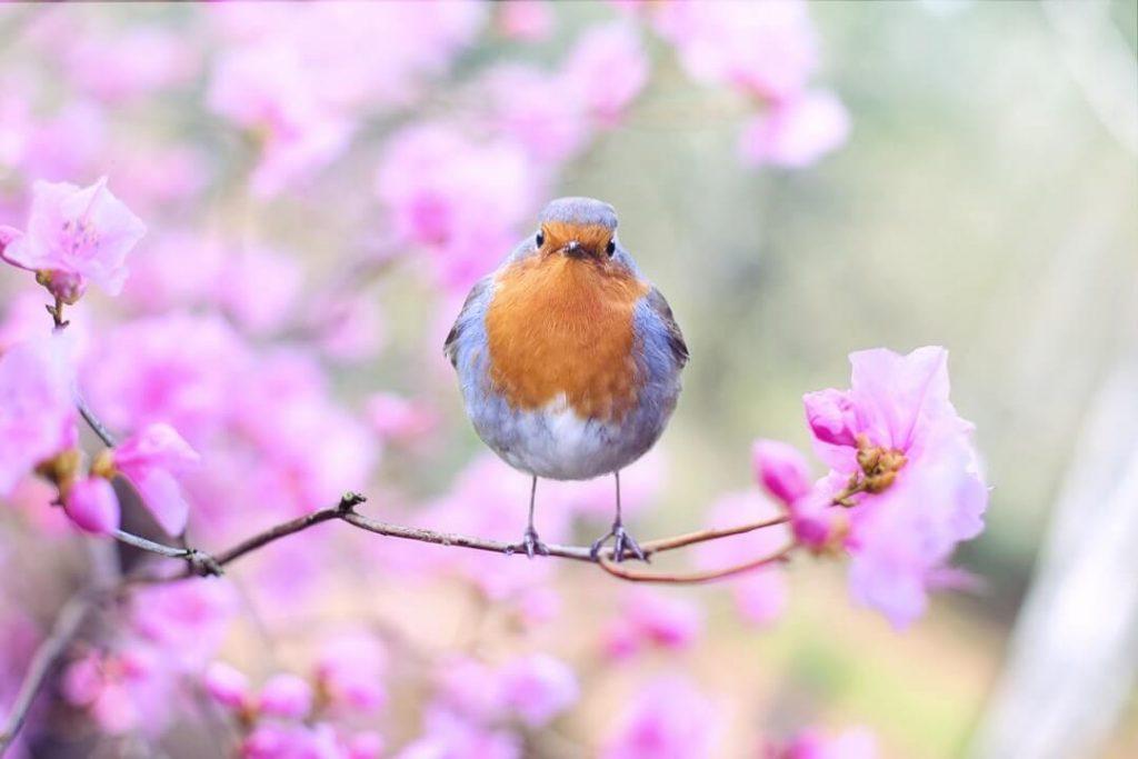 Spring is a Healthy Renewal